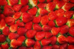 Erdbeere - voller Rahmen Stockfotografie