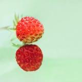 Erdbeere zwei auf einem hellgrünen Hintergrund Lizenzfreie Stockfotos