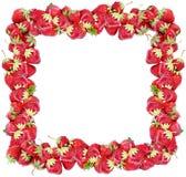 Erdbeerefeld Stockbild