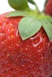 Erdbeeremakro Stockbild