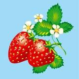 Erdbeeren Lizenzfreie Stockbilder