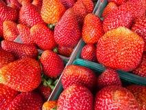 Erdbeeren Stockfotografie