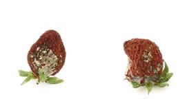 Erdbeeren stock footage