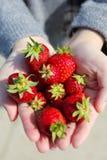 Erdbeeren auf Damenhand Lizenzfreie Stockbilder