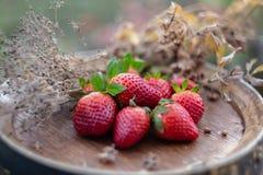 Erdbeeren auf einem h?lzernen Fass des Weins im Obstgarten in der Sommerzeit Rote Fr?chte stockfotografie