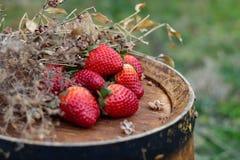 Erdbeeren auf einem h?lzernen Fass des Weins in einem Obstgarten in der Sommerzeit lizenzfreies stockbild