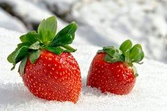 Erdbeeren auf Eis im Winter lizenzfreies stockfoto