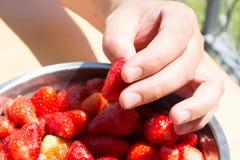 Erdbeeren aufheben Stockfotografie
