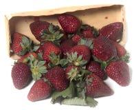 Erdbeeren aus dem Kasten heraus Lizenzfreie Stockfotos
