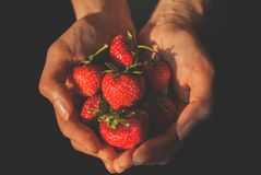 Erdbeeren in den Händen lizenzfreies stockfoto