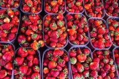 Erdbeeren in den Kästen Lizenzfreies Stockbild