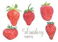 Erdbeeren in den verschiedenen Formen Stockbilder