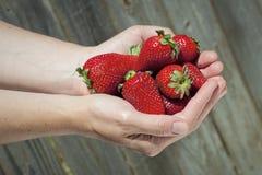 Erdbeeren in der Hand Stockfotografie