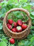 Erdbeeren in einem Korb stockfotografie