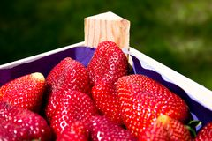 Erdbeeren in einem Rahmen Lizenzfreie Stockbilder
