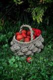 Erdbeeren in einem Weidenkorb stockfotografie