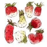 Erdbeeren eingestellt Lizenzfreies Stockfoto
