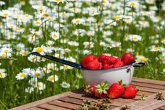 Erdbeeren frisch vom Garten Stockfotografie