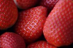 Erdbeeren I Lizenzfreies Stockbild