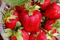 Erdbeeren im Garten Lizenzfreie Stockfotos
