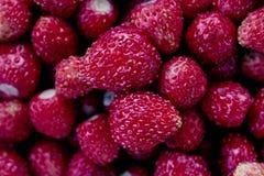 Erdbeeren im Garten der Großmutter im Sommer lizenzfreie stockfotos