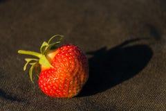 Erdbeeren im Sonnenuntergang Stockbilder