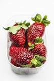 Erdbeeren im transparenten Kasten stockbilder