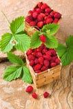 Erdbeeren in Körbe Lizenzfreies Stockfoto