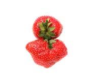 Erdbeeren mit Blättern Getrennt auf einem Weiß Lizenzfreies Stockfoto