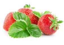 Erdbeeren mit Blättern Lokalisiert auf Weiß Stockfoto