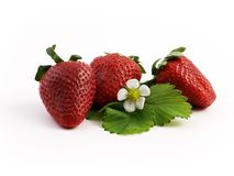 Erdbeeren mit Blume Lizenzfreies Stockbild