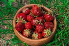 Erdbeeren Organische Beeren-Nahaufnahme Reife Erdbeere im Franc Lizenzfreie Stockfotos