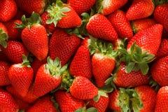 Erdbeeren säubern und einfach stockbilder