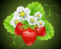 Erdbeeren umgeben durch Blumen Lizenzfreie Stockfotos
