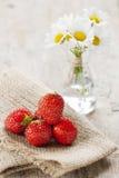 Erdbeeren und Gänseblümchen Stockfotos