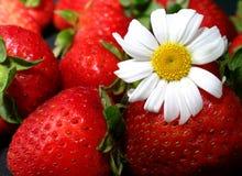 Erdbeeren und Gänseblümchen Stockbilder