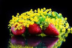 Erdbeeren und Mimosen Stockbild
