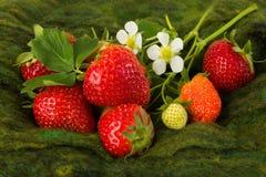 Erdbeeren und weiße Blumen Lizenzfreie Stockfotografie