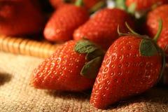 Erdbeerenahaufnahme Lizenzfreie Stockfotografie