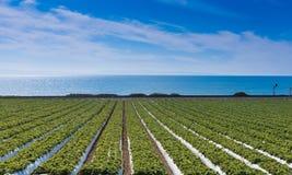 Erdbeerfeld auf Pazifischem Ozean Lizenzfreie Stockbilder