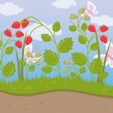 Erdbeerfeld, grüner Hintergrund mit reifen Beeren vector Illustration, Karikaturart Stockbilder