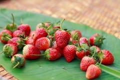 Erdbeerfrische Beeren Lizenzfreie Stockfotografie