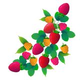 Erdbeerhimbeeren tragen auf weißem Hintergrund, gesundem Lebensstil oder Diätkonzept, Logo für frische Früchte Früchte lizenzfreie abbildung