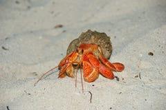 Erdbeerland-Einsiedlerkrebs Coenobita-perlatus auf Sand stockbilder