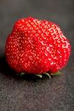 Erdbeernahes hohes Lizenzfreies Stockbild