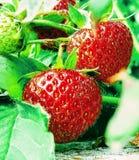 Erdbeernummer eins stockfotos