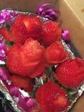 Erdbeerrosen stockfoto