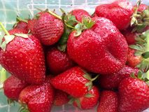 Erdbeerrot im Frühjahr Stockfotos