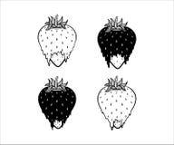 Erdbeervektorillustration in Schwarzweiss lizenzfreies stockbild