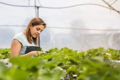 Erdbeerzüchter mit Ernte, landwirtschaftlicher Ingenieur, der herein arbeitet lizenzfreies stockbild